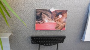 Here's the spot on my wall at work where a picture of my cats has been hanging for years.