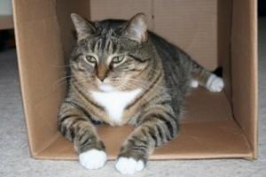 Emmaline in box